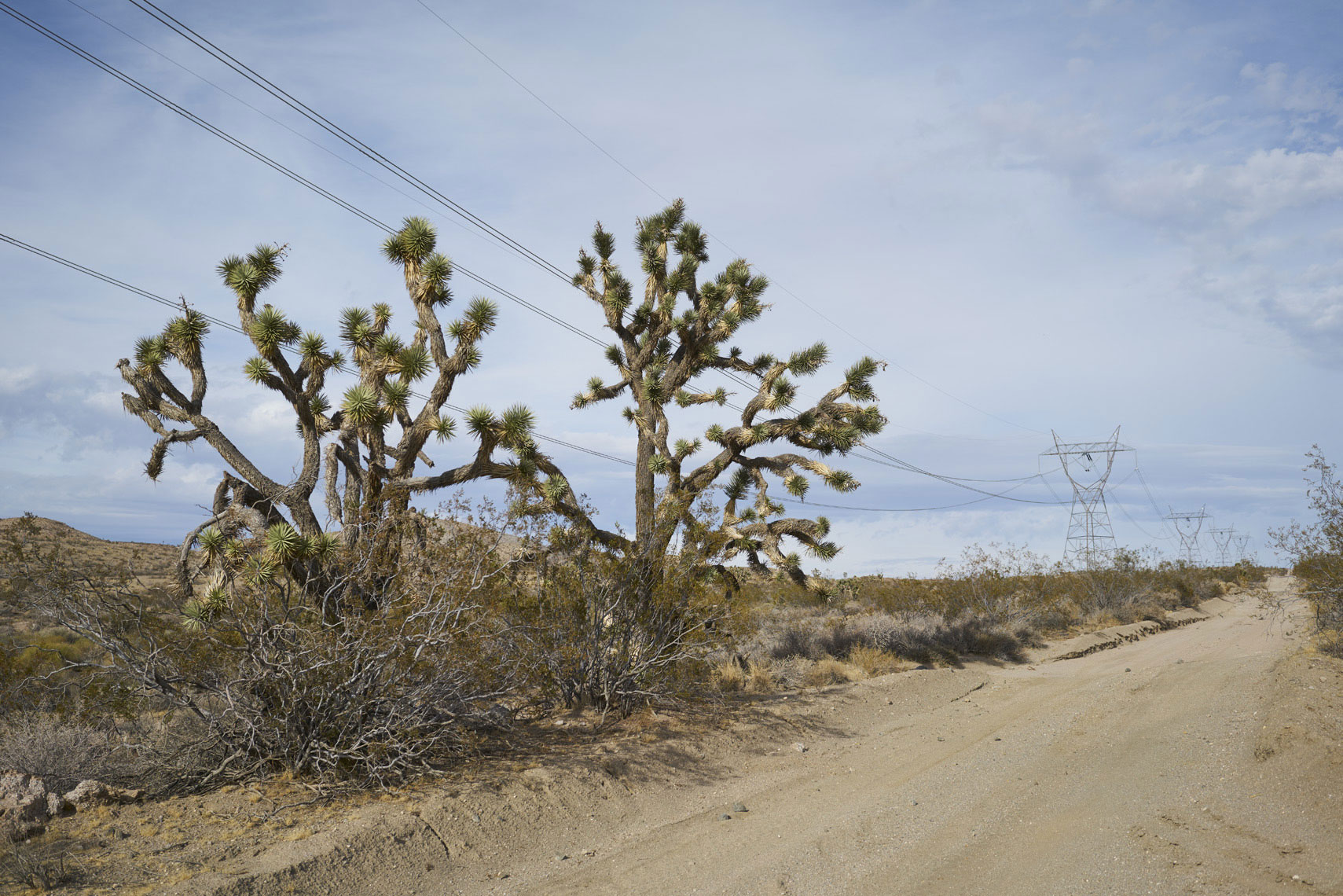 Yucca along a power line road in Mojave National Park California Sean Dagen Photography